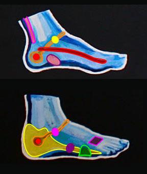 Reflexology chart of right foot
